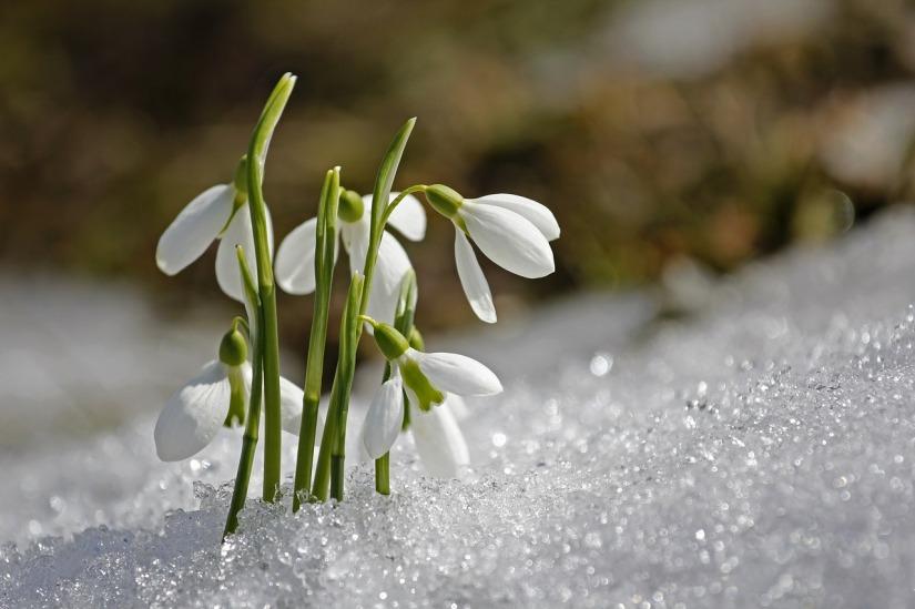 spring-1166564_1280